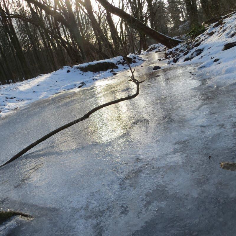De winter in bos stock afbeeldingen