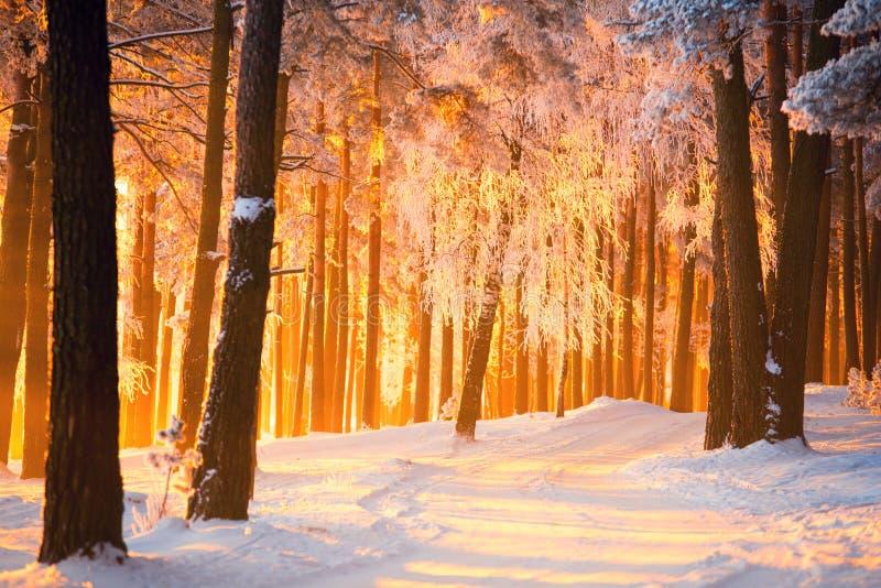 De winter bosachtergrond   stock fotografie