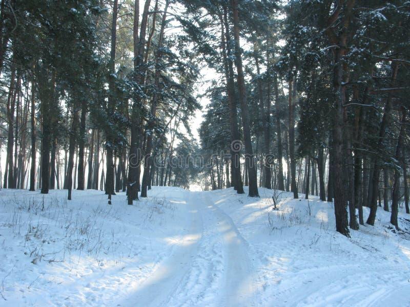 De winter boslandschap stock afbeeldingen
