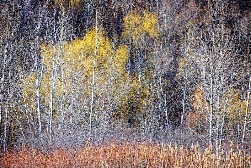 De winter boslandschap met naakte bomen royalty-vrije stock afbeeldingen