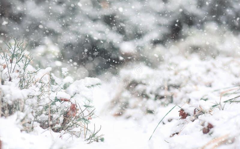 De winter boslandschap van de winterbos op een zonnige dag Sneeuw-c stock afbeeldingen