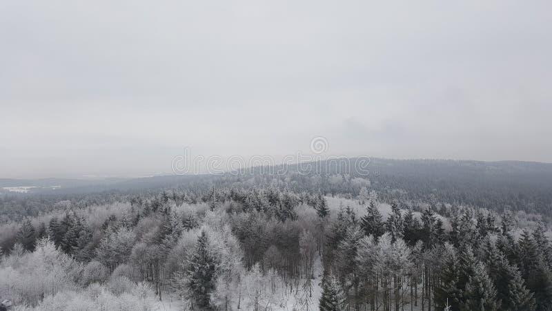 De winter bosmening stock afbeeldingen