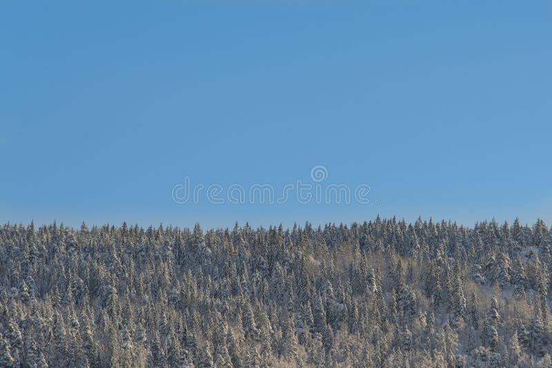 De winter bosmening met duidelijke blauwe hemel royalty-vrije stock foto