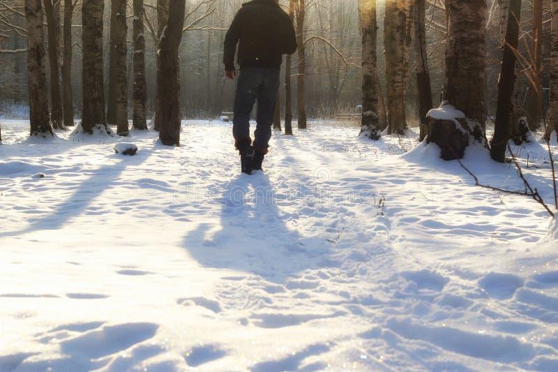 De winter bosmens royalty-vrije stock foto