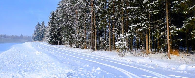 De winter bospanorama van het de wintersprookje Soort hoge oude pijnbomen in de snow-covered bos Ijzige versheid en de sneeuw royalty-vrije stock afbeelding