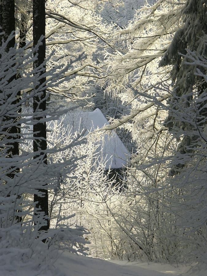 de winter bosweg in ochtendzon royalty-vrije stock foto's