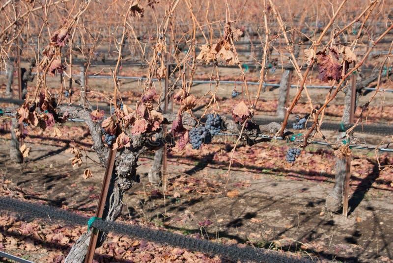 De winter in Californische Wijngaarden stock foto's