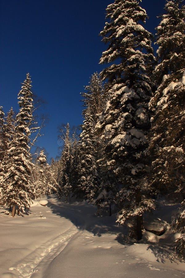 De winter in de Altai-Bergen stock fotografie