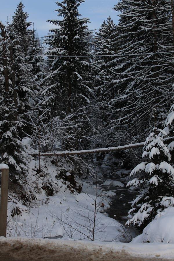 In de winter de boskarpaten Heel wat die sneeuw, bomen in sneeuw worden samengebundeld royalty-vrije stock afbeelding