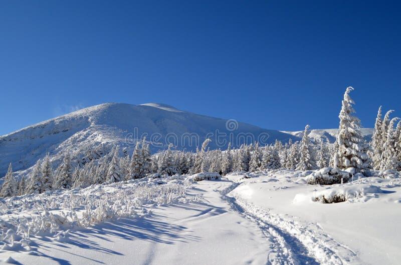 De winter de Karpaten stock afbeeldingen