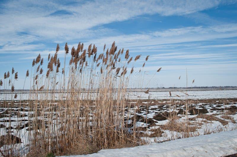 De winter - de Lente stock afbeelding