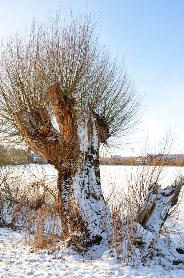 De winter in Denemarken stock foto
