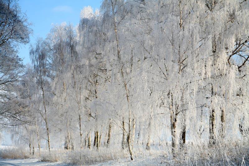 De winter in Denemarken royalty-vrije stock foto's