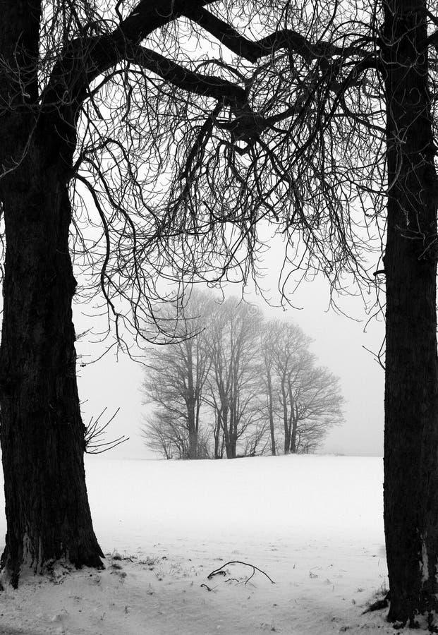 De winter in Denemarken royalty-vrije stock afbeelding