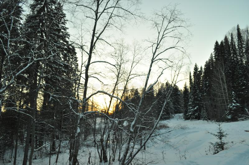 De winter donker bos royalty-vrije stock fotografie