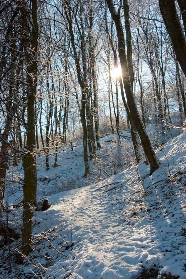 De winter in een bos stock foto's