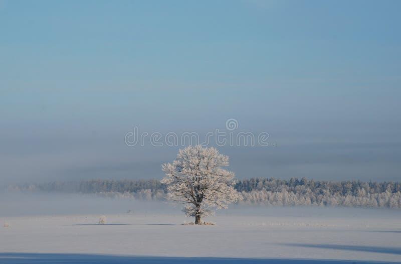 De winter eenzame boom stock afbeeldingen