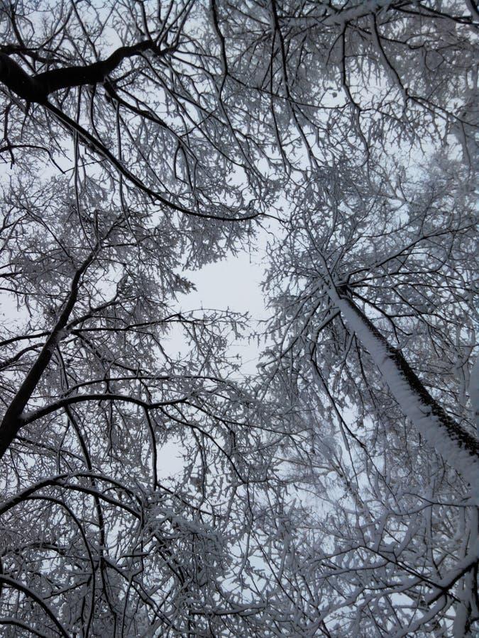 De winter en zware sneeuwval stock afbeelding