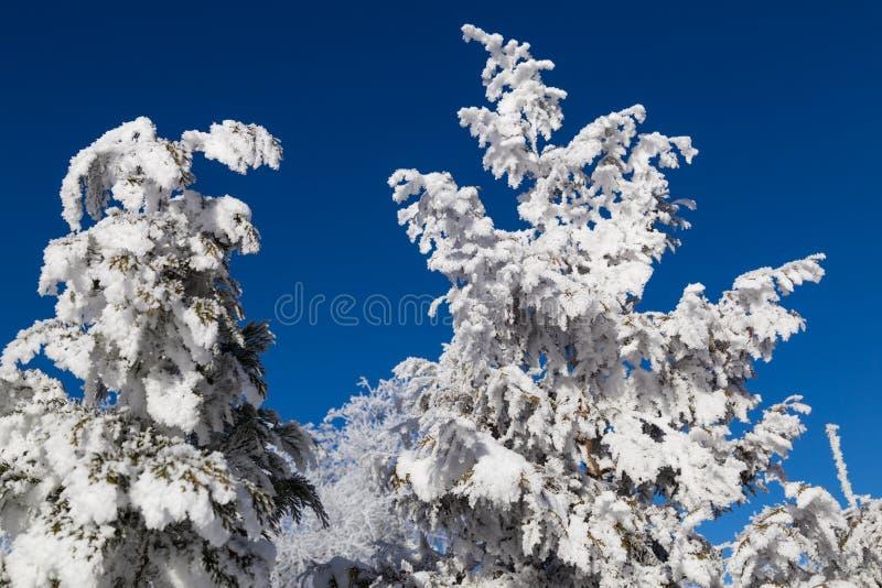 De winter fairytale, snow-covered bomen stock fotografie