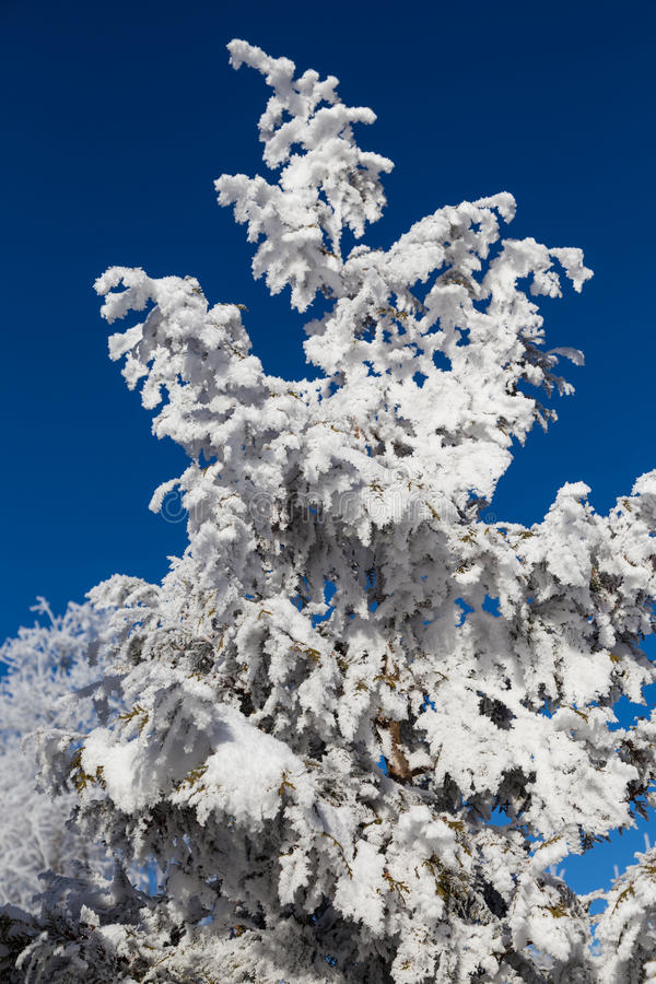 De winter fairytale, snow-covered bomen royalty-vrije stock afbeelding