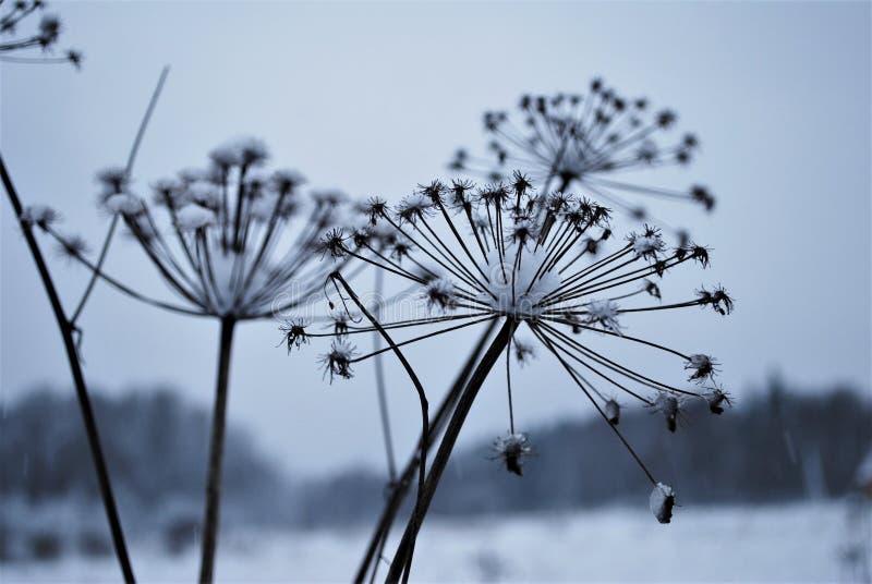 De winter field royalty-vrije stock afbeelding