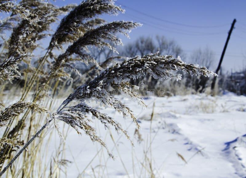 De winter field royalty-vrije stock foto