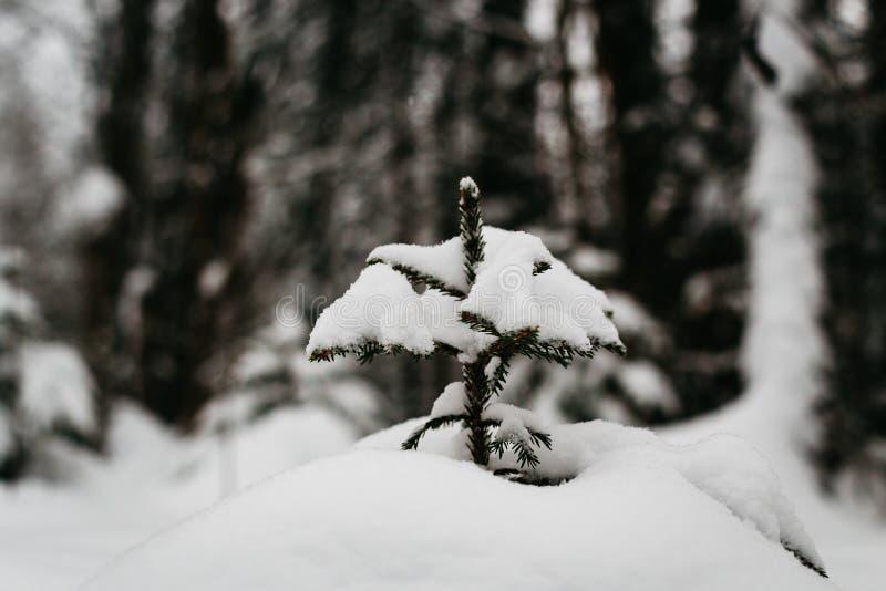 De winter in Finland omvat in sneeuw stock foto's