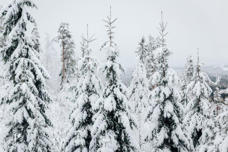 De winter in Finland omvat in sneeuw stock fotografie