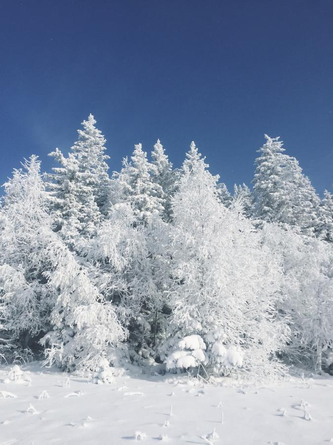 De winter Forrest stock afbeeldingen
