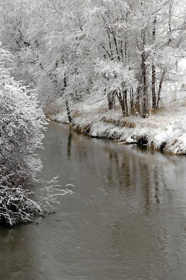 De winter Forrest door Rivier stock foto