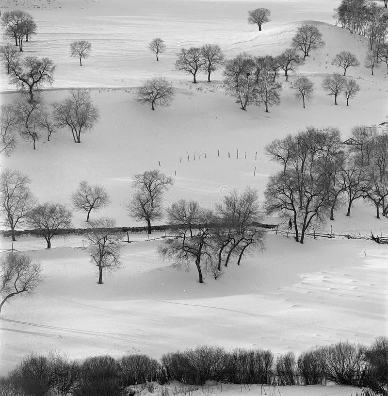 De winter forse royalty-vrije stock afbeeldingen