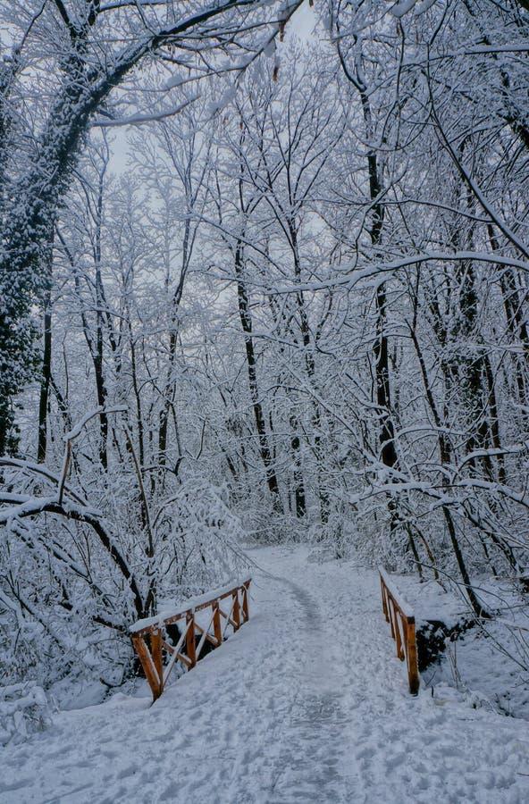 De winter is gekomen royalty-vrije stock afbeelding