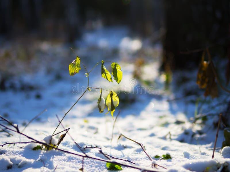 De winter is gekomen en de aard is in slaap gevallen stock afbeelding