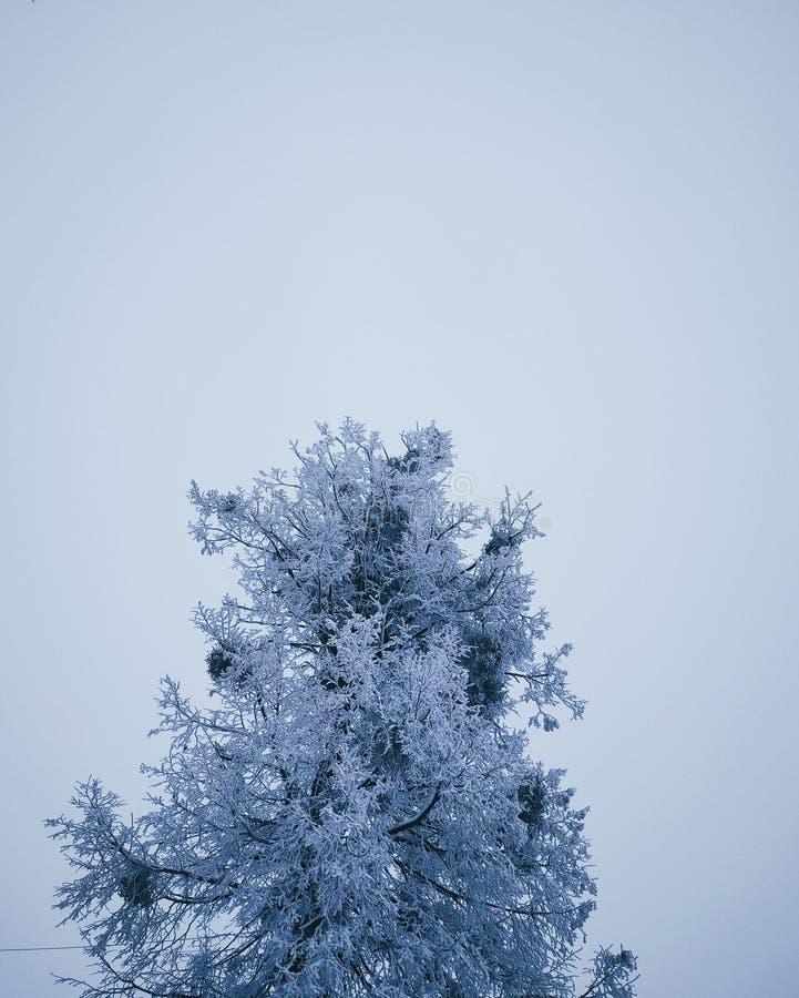 De winter gekregen kouder royalty-vrije stock afbeeldingen