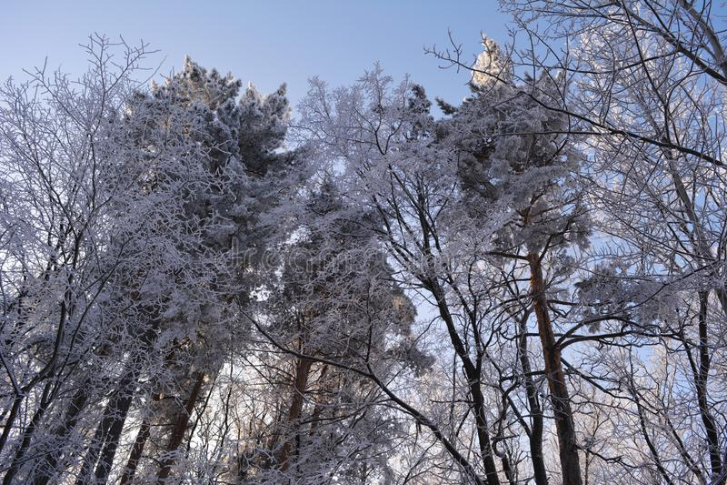 De winter gemengd die bos door het Winterse landschap van de sneeuwrijp wordt behandeld stock foto's