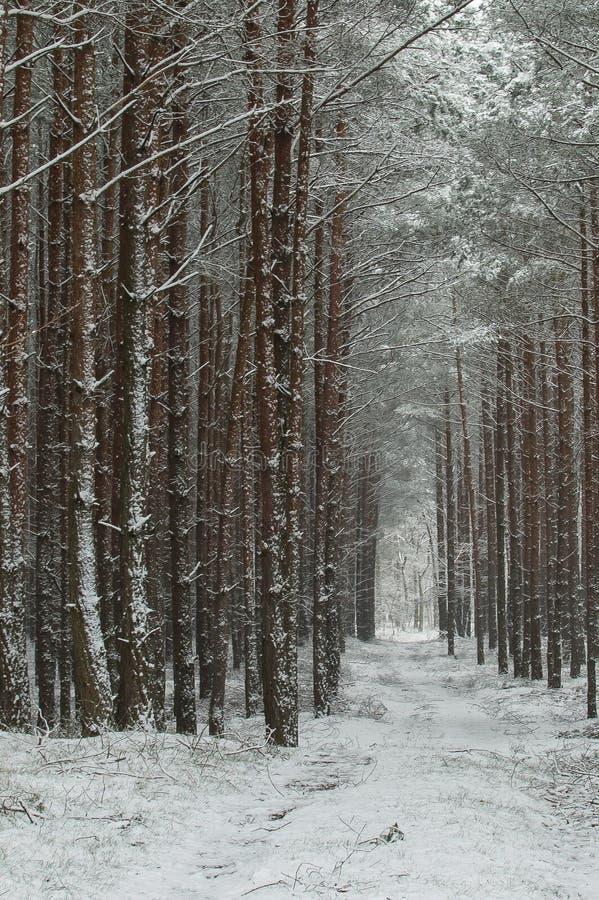 De winter in het bos royalty-vrije stock fotografie