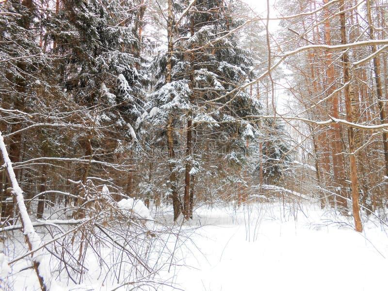 De winter in het diepe hout stock foto's