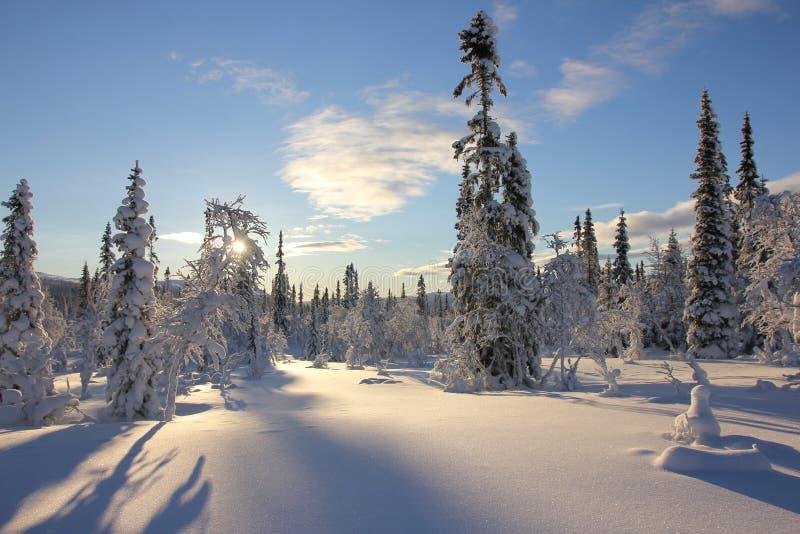 De winter in het hout royalty-vrije stock foto's
