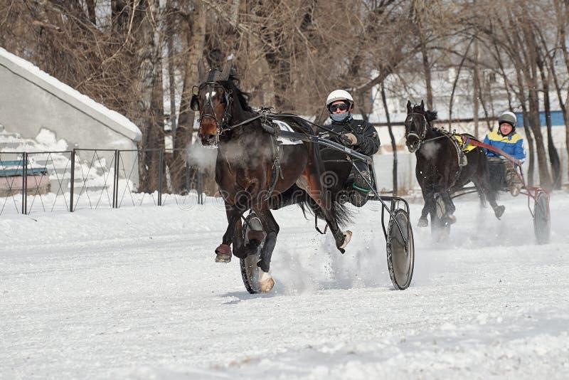 De winter Het lopen is een test van dravers stock fotografie