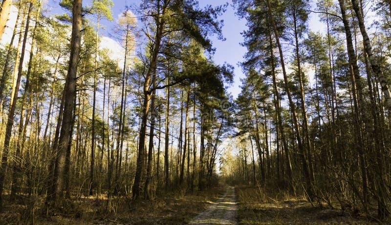 De winter - het Nationale Park van Kampinos - Masovia, Polen royalty-vrije stock foto's