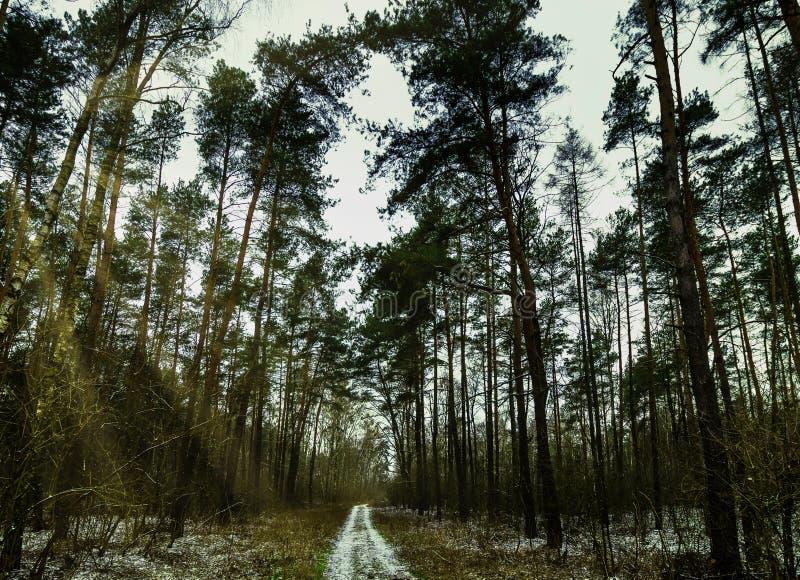 De winter - het Nationale Park van Kampinos - Masovia, Polen royalty-vrije stock afbeeldingen