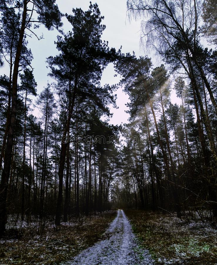 De winter - het Nationale Park van Kampinos - Masovia, Polen stock foto