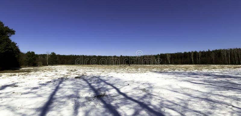 De winter in het Nationale Park van Kampinos - Polen stock afbeelding