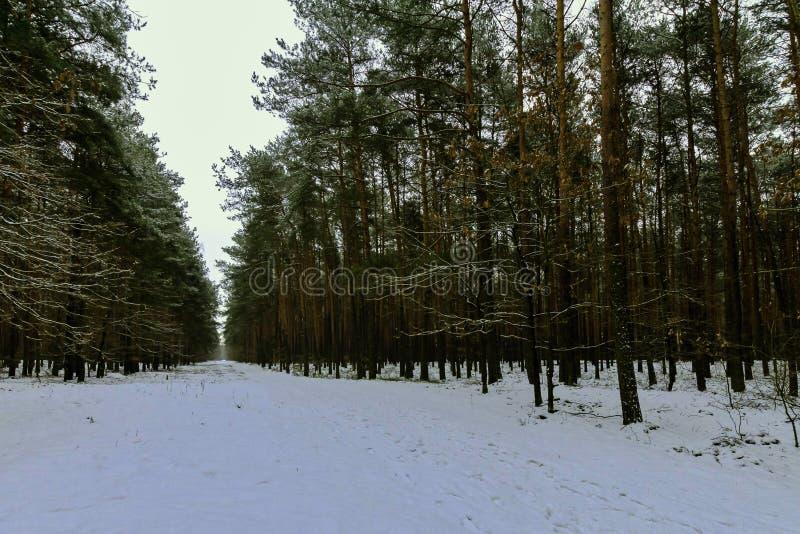 De winter in het Nationale Park van Kampinos, Polen royalty-vrije stock foto