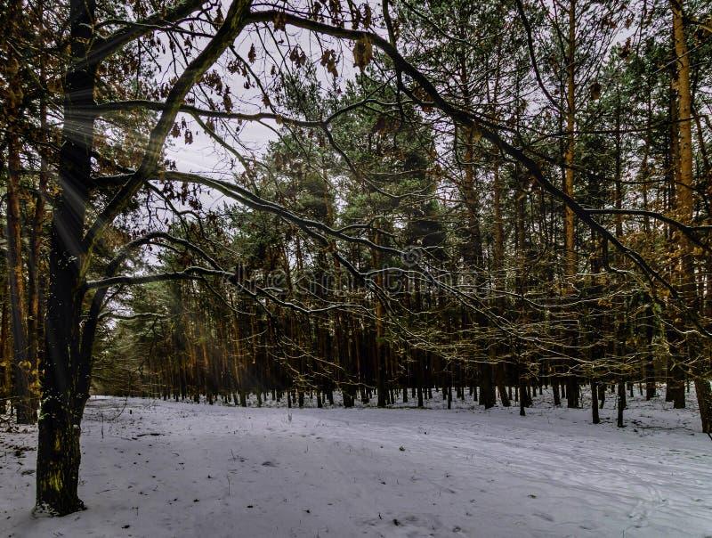 De winter in het Nationale Park van Kampinos, Polen stock afbeeldingen