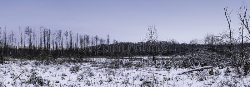 De winter in het Nationale Park van Kampinos - Polen royalty-vrije stock afbeeldingen
