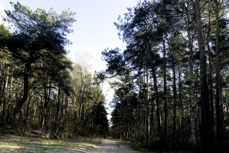 De winter in het Nationale Park van Kampinos - Polen stock afbeeldingen