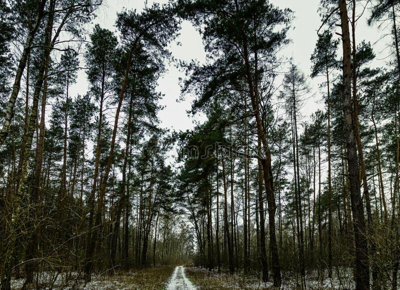 De winter in het Nationale Park van Kampinos - Polen stock fotografie