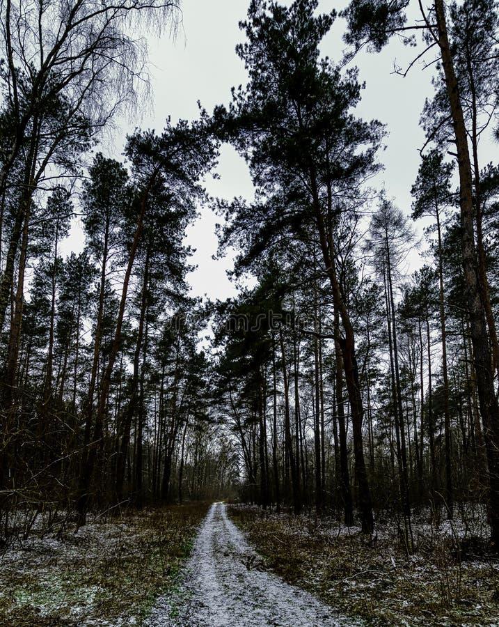 De winter in het Nationale Park van Kampinos - Polen royalty-vrije stock afbeelding