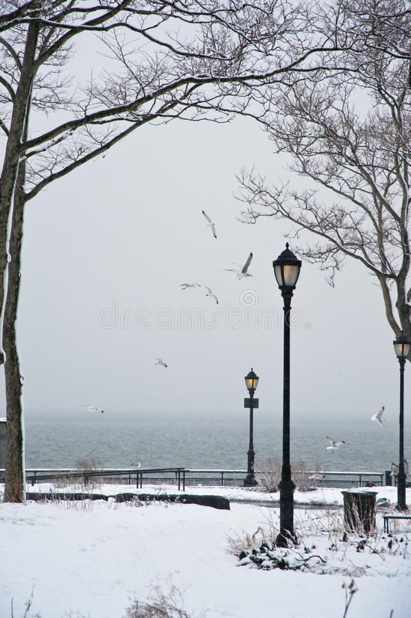 De winter in het park royalty-vrije stock afbeelding